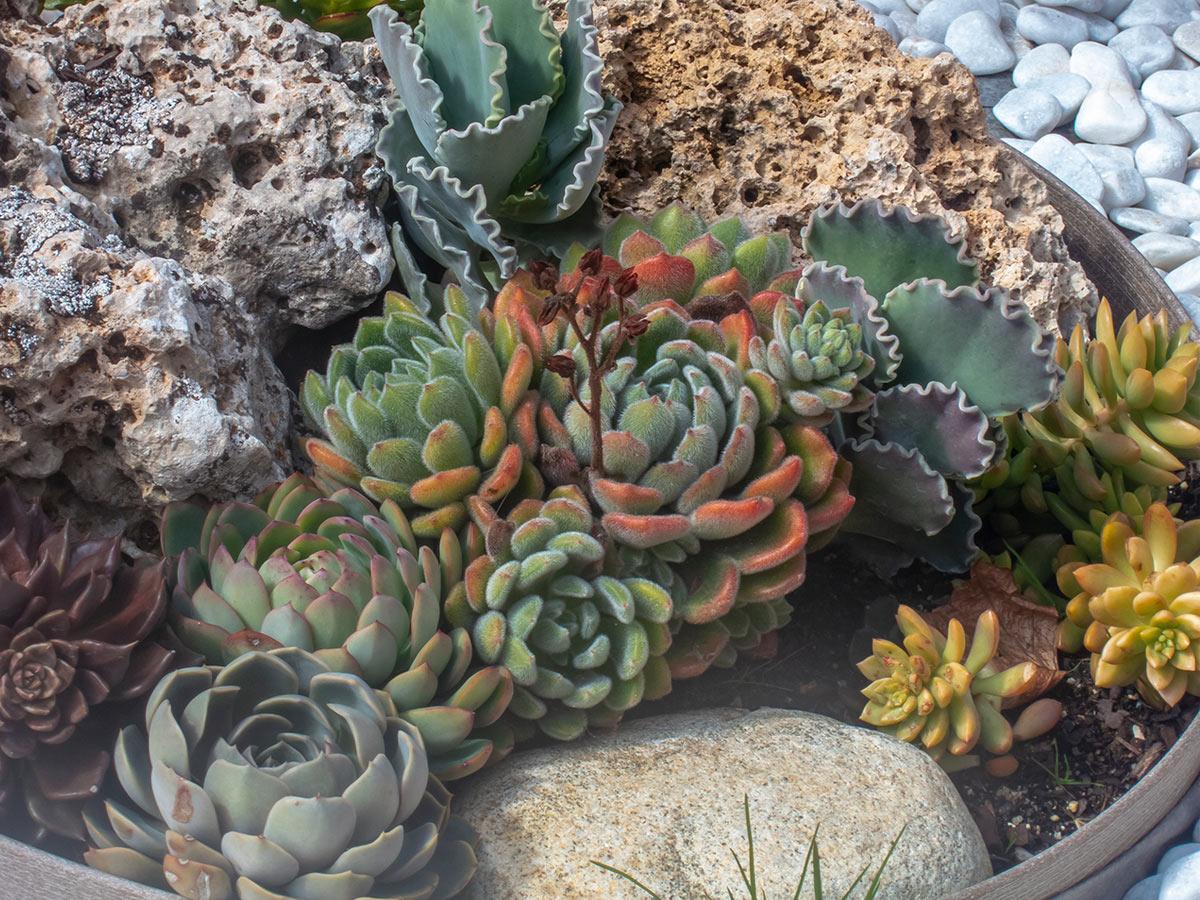 Jardín Sensorial y Huerto Ecológico