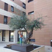 Plazas públicas en la Fundación Polibea